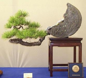 pinus-densiflora-bonsai_719