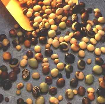 soya_bean_varieties_biofuels