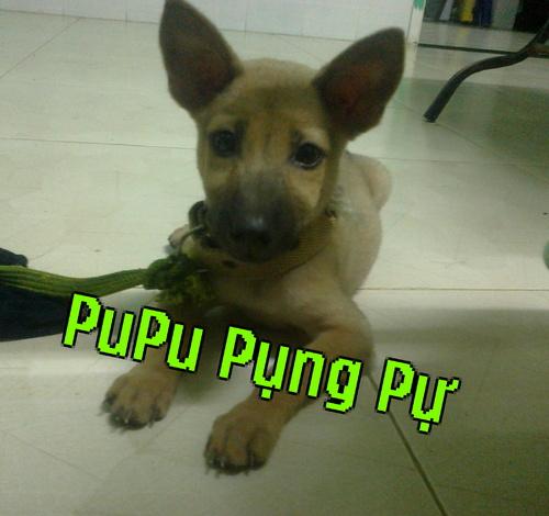 bu_bu_cung_cung_cua_bi_500