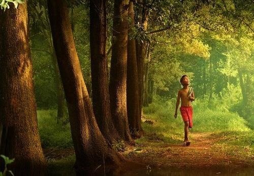 Dạo chơi trong rừng vắng