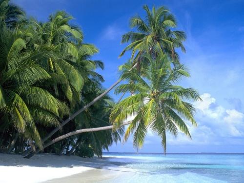 palm-paradise_500