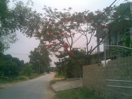 phuongvi3_500