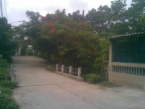 phuongvi5_500
