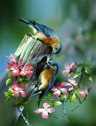 http://d4.violet.vn/uploads/blogs/874/bluebirds-spring-joy.jpg